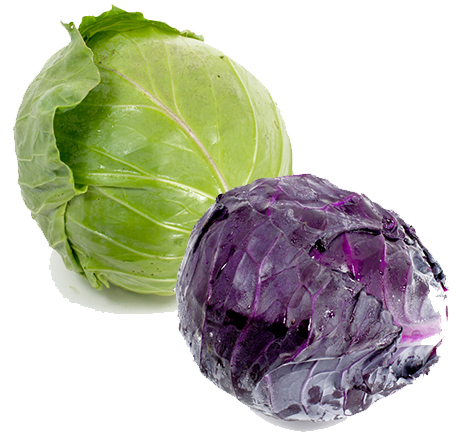 Local Organic Cabbage
