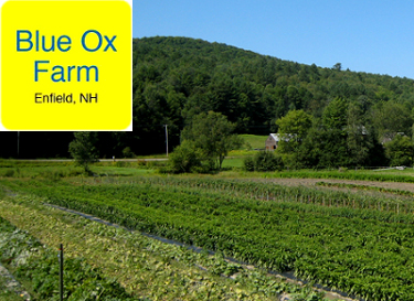 Blue Ox Farm